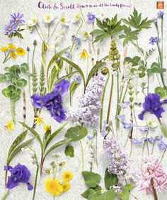 Spring Flower Props &Mockups by JSquarePresents on @creativemarket