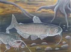 Catfish Creek (original Acrylic painting) by Goohsnest on Etsy Fish Background, Channel Catfish, Fish Artwork, Canvas Ideas, Painting Patterns, Gouache, Painting & Drawing, Jr, Fishing