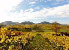 Ein Blick der zum Träumen verpflichtet! Der goldene Oktober an der der Südlichen Weinstrasse - Pfalz!