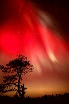Magic Aurora Colours In Arcipelago, Winter