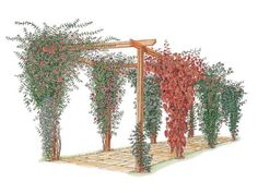 Learn how to choose and maintain climbing plants for arches and pergolas with this gardening guide from DIY Network.