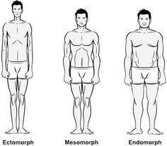 Workouts & Diet Plans for Ectomorph, Mesomorph and Endomorph Body Types