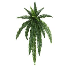 Furniture & Homewares Online at Beautiful Prices | Temple & Webster Fern Plant, Plant Leaves, Boston Ferns, Artificial Flowers And Plants, Star Shape, Wall Colors, Cactus Plants, Accent Decor, Vintage Inspired