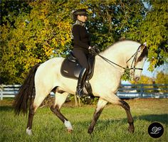 Stallion to watch. Andiamo 2005. @ Lusitano NW. To bad they don't really show in sporthorse classes.