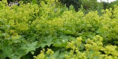 Cretisoara, proprietati, beneficii, mod de utilizare, contraindicatii Herbs, Blog, Plant, Herb, Blogging, Medicinal Plants