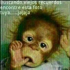 Spanish Jokes, Funny Spanish Memes, Funny Phrases, Funny Quotes, Funny Memes, Animated Emojis, Good Night Sleep Tight, Baby Animal Nursery, Baby Animals