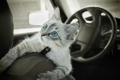 Making Your Cat's Vet Trips Less Stressful and More Fun