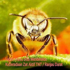 Untuk membuat 1 kg madu, koloni lebah harus mendatangi 4 juta bunga, menempuh perjalan setara dengan 4 kali mengelilingi dunia