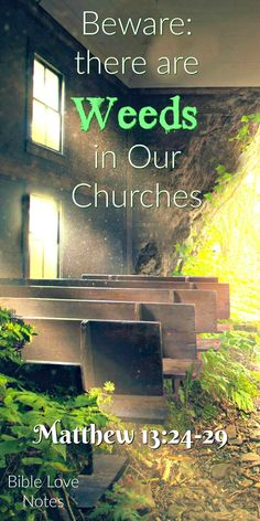 """Matthew 13 warns us about """"weeds"""" in the church. We must know and teach Scripture."""