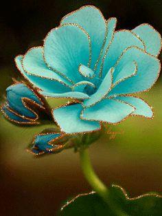 Нежный цветок магнолии