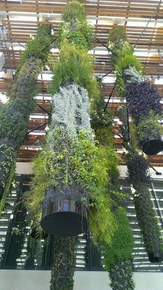 Beautiful hanging garden at Perez Art Museum Miami