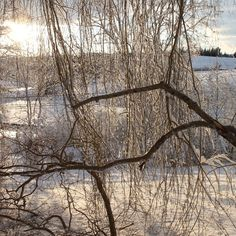 Winter Branches by avardwoolaver