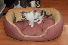 Handmade bed for small/medium size dogs, manually sewn and finished, made from natural materials, size 71/53 cm, hight 23 cm, filled with silicone down and comfortable for any furry pets. Removable cushion. Unique design! The rectangular shape of the bed and high margins are ideal for squatting and provides a sense of security for the pet . The bed is washable at 30 ° C.
