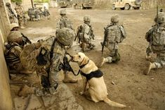 U.S. Army Staff Sgt. Kevin Reese takes a knee with his military working dog Grek after hearing gunfire within 100 meters during a search for insurgents in Buhriz, Iraq, April 10, 2007. U.S. Army Soldiers from 5th Battalion, 20th Infantry Regiment, 2nd Infantry Division and Iraqi army soldiers from 4th Battalion, 2nd Brigade, 5th Iraqi Army Division are going house-to-house in search for weapons caches and enemy fighters after more than 1,000 residents of this Baqubah suburb were displaced by…