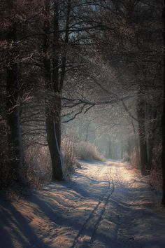 le chemin dans le bois: This photo has a deeper depth of field and contrasting colors with the darker trees and the lighter snow; your eyes move with the trails deeper into the forest.
