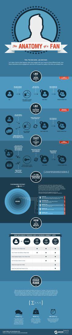 The Anatomy of a Facebook Fan #infografik