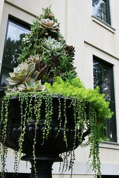 What a spectacular planting. Wonder what the tower thingie is they're planted on. I see hens and chicks, string of pearls and some sedums.