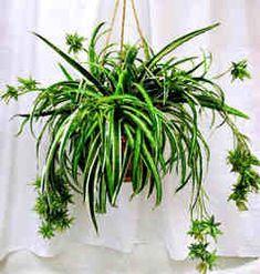 http://lexecharleston.hubpages.com/hub/Bathroom-Plants-Tips-For-Using-Plants-In-Bathrooms