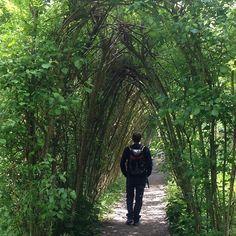 #InstagramELE #ramas  Me encantan los túneles formados por ramas. Este está en los jardines del castillo de Blarney en Irlanda. En el parque Güell hay otro muy parecido #túnel #hojas #verde