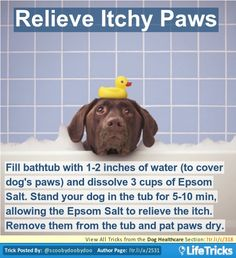 Fill bathtub with 1-2 inches of water (to cover dog's paws) and dissolve 3 cups of Epsom Salt. Stand your dog in the tub for 5-10 min, allowing the Epsom Salt to relieve the itch. Remove them from the tub and pat paws dry.