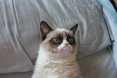 Ils dominent Internet et font la loi dans les foyers du monde entier, mais que sait-on réellement des émotions des chats ? Des chercheurs australiens et britanniques se sont penchés sur la question grâce à un système de codage facial.