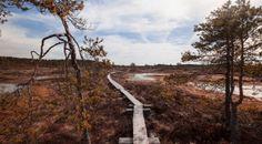 Torronsuon kansallispuisto, Kanta-Häme- Nella Ruusunen