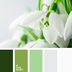 greenery, белый, оттенки зеленого, оттенки серого, подбор цвета для дома, свадебное цветовое решение, серебристый, серебрянный, серебряный, серый, тёмно-зелёный, цвет листьев, цвет серебра, цвета Pantone 2017, цвета весны.