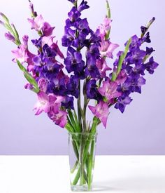 inkspired musings: August's Gladiolus Flower and Meanings of Flowers - Modern