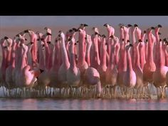 Unintentionally Hilarious: Who knew flamingos are the synchronized dancers of the winged family?