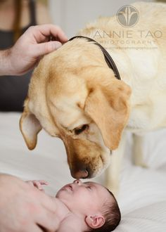 San-Francisco-Bay-Area-newborn-lifestyle-photography-dog-and-baby-touching-noses