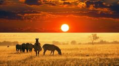 dying to see that african sunset again
