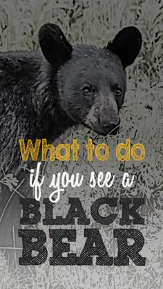 What to do if you see a black bear in your own backyard | Wildlife Safety | Southern Virginia