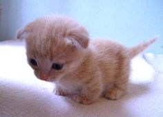 カワイイ猫画像 39|ねこLatte+