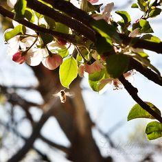 Ahhhh... spring!