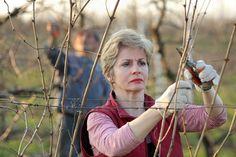 Kiedy i jak przycinać winogrona? Praktyczne porady! Gardening, Health, Gardens, Bebe, Lawn And Garden, Health Care, Horticulture, Salud