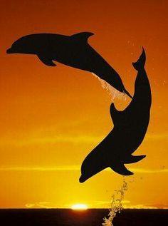 Bahamas sunset dolphins at play