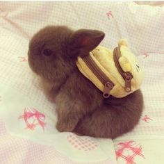 because every bunny needs a backpack, right?