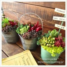 zinc window box with succulents - Google Search