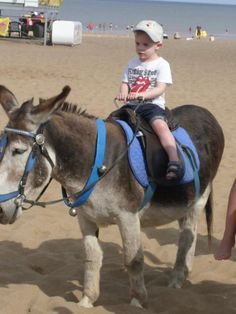 @lauraclegg    #PictureThisTPE my son on his first donkey ride! A must at the seaside :)