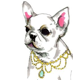 French Bulldog - Discoveredd.com