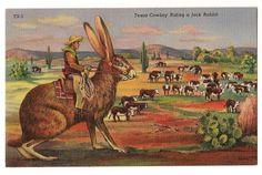Texas Cowboy Riding a Jack Rabbit Vintage Postcard