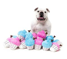 Cute Dog Toys, Cool Toys, Easy Cake Recipes, Dog Food Recipes, Cake Dog, Dog Safe Cake Recipe, Rap, Blue Icing, Cupcakes