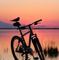 I believe in the sun, even when it is not shining. I believe in love, even when i do not feel it. Splash Photography, Sunrise Photography, Bike Pedals, Theme Background, Bicycle Art, Believe In God, Keep Fit, Mountain Biking, Touring