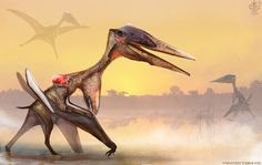More Pterosaurs for drawdinovember. This time it's the zhejiangopterus. *DISCLAIMER: Once again I'm not a paleo artist nor am I trying to be. So the exploration of sexual dimorphis...