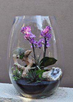Orchid Air Plant Terrarium