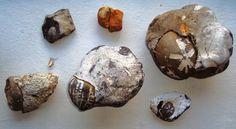 En særlig oplevelse når søpindsvinet sidder i de originale sten, her flint og cementsten