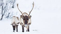 Rudolph The Red, Red Nosed Reindeer, In This World, Swarovski, Lens, Blog, Outdoor, World, Outdoors