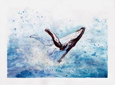 Humpback whale by Patrícia Kleinová. Had some fun with aquarelle and beautiful creature ♥  A3, aqurelle and liner 2016. @pkdrawings