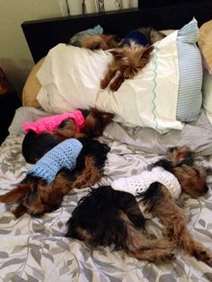 Can u count 5 lil Yorkies sleeping? The one in front looks like Harley, lol