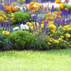 25 Tips for Planning the Perfect Garden Full Sun Flowers, Full Sun Plants, Unusual Flowers, Beautiful Flowers, Shade Tolerant Plants, Garden Catalogs, Colorful Plants, Climbing Roses, Flower Planters